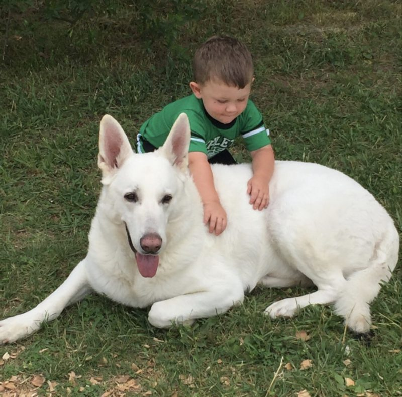 White German Shepherd Breeders And
